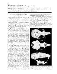 Peromyscus simulus