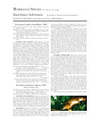 Dactylomys boliviensis - Clark Science Center