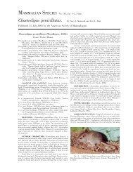Chaetodipus penicillatus - Clark Science Center