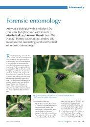 FSE 07 Forensic entomology [PDF File, 196 9 KB]