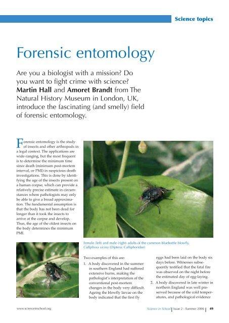 Forensic Entomology Blowfly Science In School