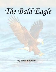 The Bald Eagle - the Scientia Review