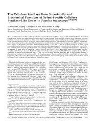 The Cellulose Synthase Gene Superfamily and ... - Plant Physiology