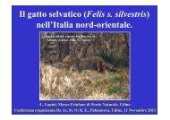 L Lapini Il gatto selvatico nell'Italia nord-orientale ... - Scubla.It