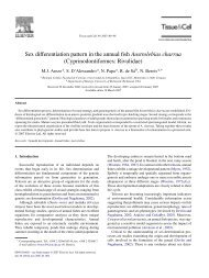 Sex differentiation pattern in the annual fish Austrolebias charrua ...