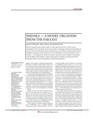 medaka — a model organism from the far east - Society for ...