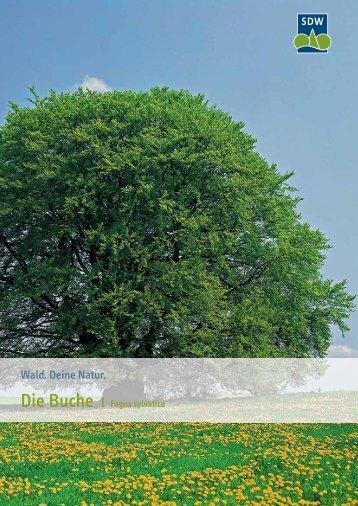 3017485 SDW Buche.indd - Schutzgemeinschaft Deutscher Wald