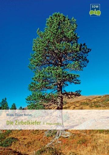 Die Zirbelkiefer - Schutzgemeinschaft Deutscher Wald