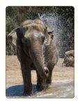 ELEPHANT ODYSSEY - San Diego Zoo Safari Park - Page 4