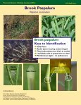 Perennial Grasses Infesting Louisiana's Rice Perennial Grasses ... - Page 2