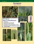 Perennial Grasses Infesting Louisiana's Rice Perennial Grasses ... - Page 3