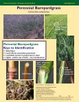 Perennial Grasses Infesting Louisiana's Rice Perennial Grasses ... - Page 4