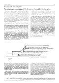 Pseudocercospora microsori - Fungal Planet - Page 2