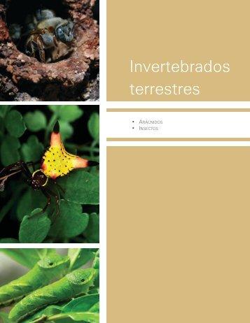 Invertebrados terrestres - Biodiversidad Mexicana
