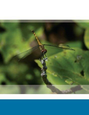 Capítulo 4.- Invertebrados acuáticos - Biodiversidad Mexicana