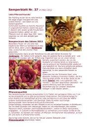 Semperblatt Nr. 37 im März 2012 - Semper-vivum.de