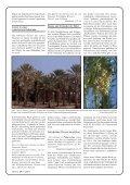 Pflanzen der Bibel - Seite 3