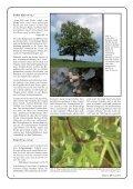 Pflanzen der Bibel - Seite 4