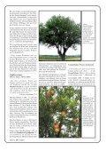 Pflanzen der Bibel - Seite 5