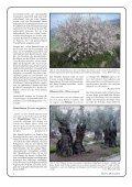 Pflanzen der Bibel - Seite 6