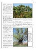 Pflanzen der Bibel - Seite 7