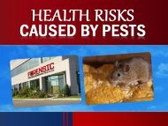 Health Risks Caused by Pests – Opt for Pest Control