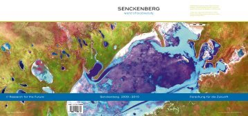 Jahresbericht 2009-2010 - Senckenberg