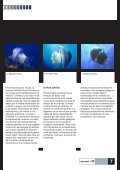 Arrecifes artificiales / Traje de buceo Castoro Noticias Aquanet ... - Page 7