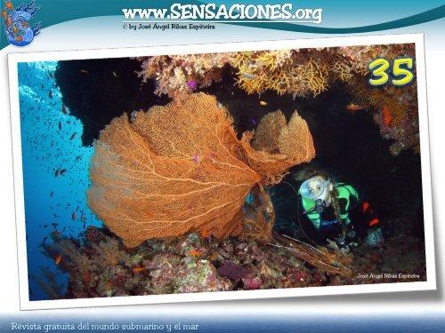 Encanto Botas Botas Popular Coral Pálido Coral Travesía