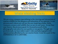 Whale Watching Trinity
