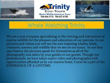 Whale Watching Trinity