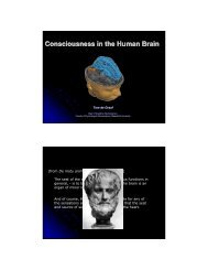 Consciousness in the Human Brain - Maastricht University