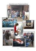 Manuelle Pferdetherapie - silverhorseranch - Seite 5