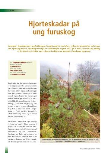 Hjorteskadar på ung furuskog - Skog og landskap