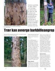 Trær kan avverge barkbille angrep ved å lage m - Skog og landskap