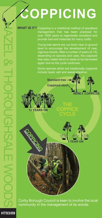 Coppicing Leaflet - Corby Borough Council