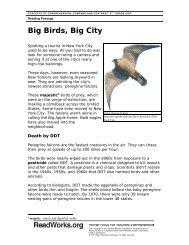 Big Birds, Big City