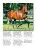 Nota completa - Revista Palermo - Page 5