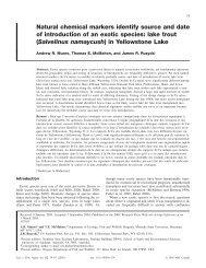 lake trout - Collins Customs