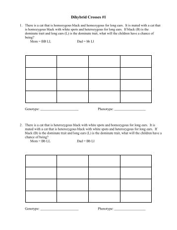 dihybrid practice worksheet. Black Bedroom Furniture Sets. Home Design Ideas
