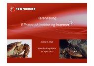 Astrid K Woll 2012 04 16 Effekt taretråling hummer krabbe_2