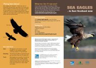 SEA EAGLES - Scottish Natural Heritage