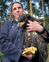 Spotlight on species - Scottish Natural Heritage