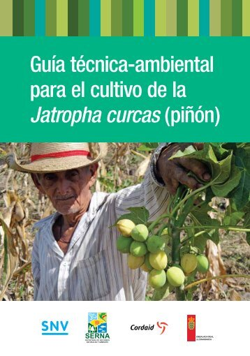Guía técnica-ambiental para el cultivo de la Jatropha curcas ... - SNV