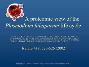 A proteomic view of the Plasmodium falciparum life cycle