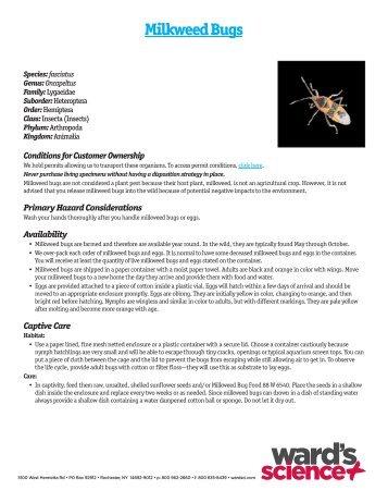 Milkweed Bugs - Ward's Science