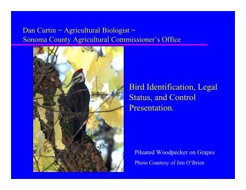 Managing and Controlling Birds - County of Sonoma