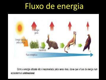 Fluxo de energia - Curso e Colégio Acesso