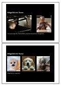 Tierschutz - Wissenschaftliche Grundlagen zu einem emotionalen ... - Seite 3