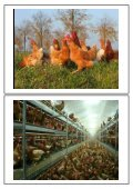 Tierschutz - Wissenschaftliche Grundlagen zu einem emotionalen ... - Seite 6
